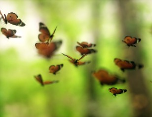 Butterflies in the woods
