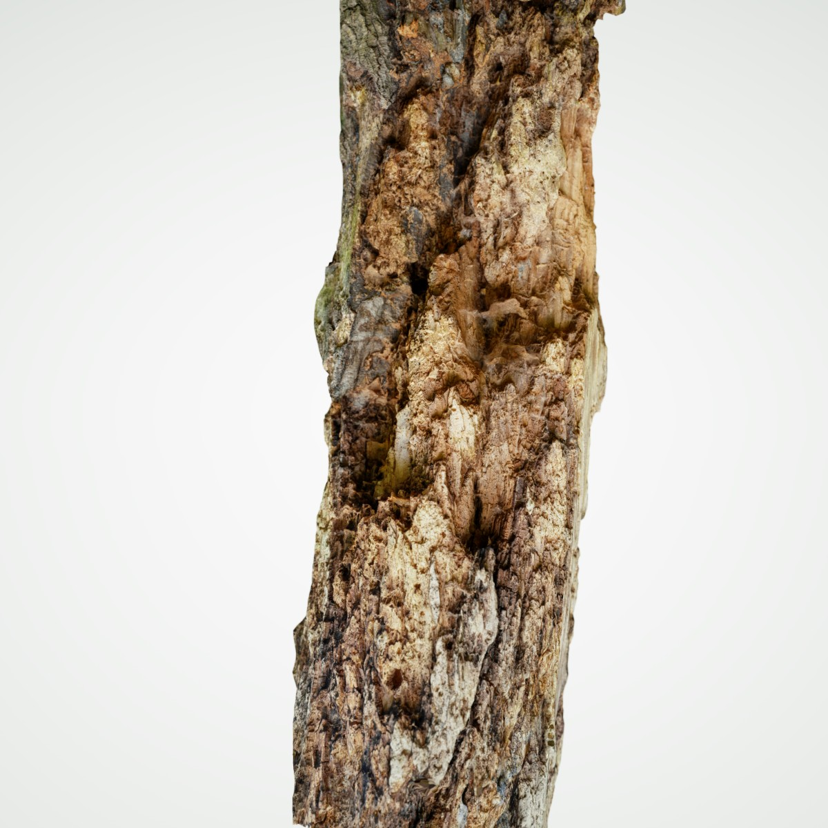 Tree bark mark florquin for Tree trunk uses